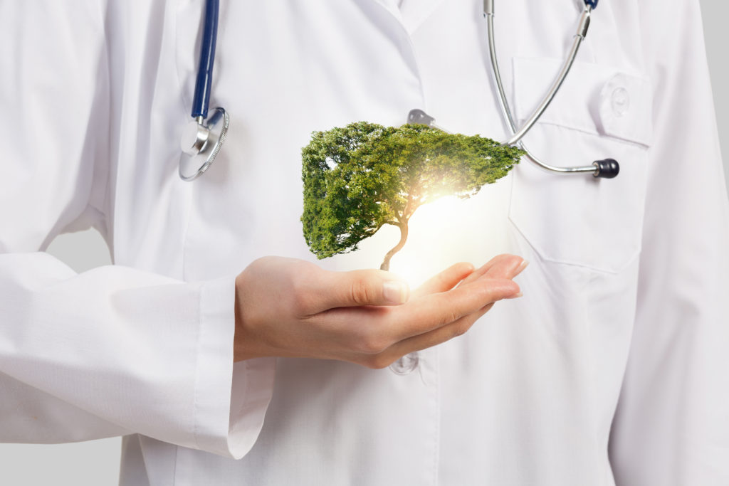 El hígado: un órgano vital en el cuerpo humano